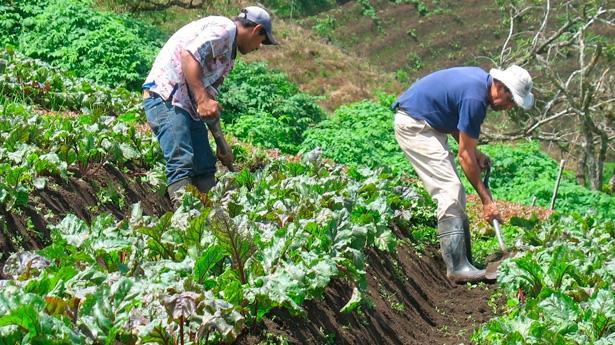 Convocatoria para sector Agropecuario del SENA